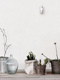 mi casa: Todas las flores