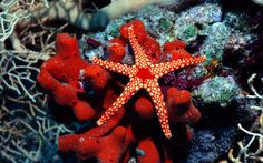 some wall paper http://www.freegreatpicture.com/animal-collection/the-beautiful-underwater-world-17353