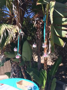 Orbs hanging in the palm tree over the guest book table.  #bellablooms