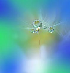 World of the Drops.... Автор: Juliana Nan