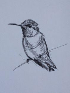 Hummingbird sketch by Julie Zickefoose                                                                                                                                                                                 More