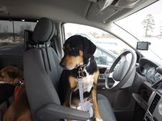 Eager to Drive Home! @ One Animal House - Adventures
