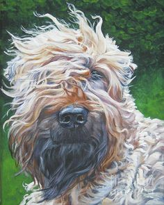 Soft Coated Wheaten Terrier by Lee Ann Shepard