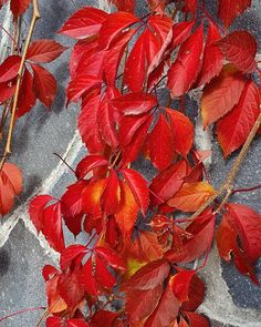 He Day, Fall Photos, Nature Photography, Colours, Photo And Video, Ps, Diva, Flowers, Plants