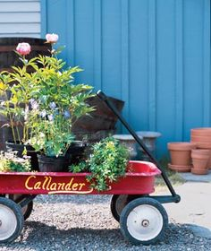 Shop Smart at the Garden Center Everything you need to know―and buy―before you start a garden.