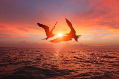 Summer sunset, idyllic seascape, birds dancing in the sky stock photo