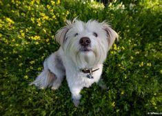 La ciencia tras las prodigiosas trufas caninas: o porqué tu perro recuerda olores que tú olvidas Dogs, Truffles, Science, Animales, Musica, Love, Pet Dogs, Doggies