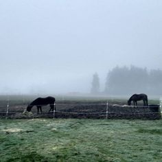 I LOVE foggy mornings! There's just something about it that is so peaceful and almost mystical. Add in the peaceful chewing of the horses eating their breakfasts and I could just sit out there all morning and relax.