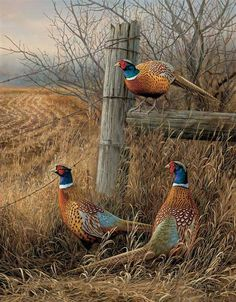 Pheasants...  photo? painting? fabulous one!! double click and takes to a French speaking blog with incredible other photos? paintings? of birds and flowers!! this published May 28, 2012.
