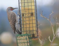 Cold weather bird food recipes (easy too!)