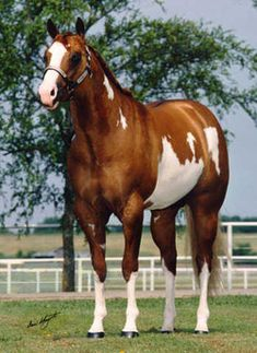 Triple Platinum - 1994 Red dun overo Paint Stallion
