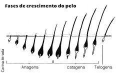 Fases do crescimento dos cílios para que possam entender seu ciclo natural de renovação ocorre naturalmente a troca de cílios