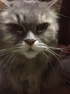 愛猫さくら姫 SHOOP+FACTORY(シュープ・ファクトリー)@オーナーブログ-81ページ目