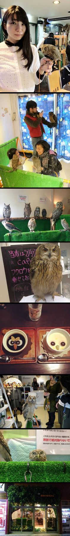 An owl cafe.