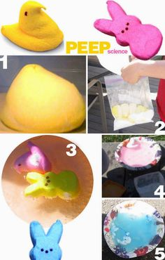 Peep Science by eisforexplore: When the kids get tired of eating their Peeps... #Science #Kids #Peeps