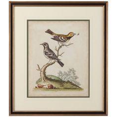 Chelsea House Edwards Bird Pairs VIII Giclee Print Art