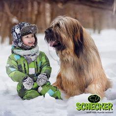 schönes wochenende bilder hunde  #schöneswochenendebilderhunde #Wochenende Gb Bilder, Funny Dogs, Advent, Animals, Fictional Characters, Beautiful, Art, Pet Dogs, Nice Asses