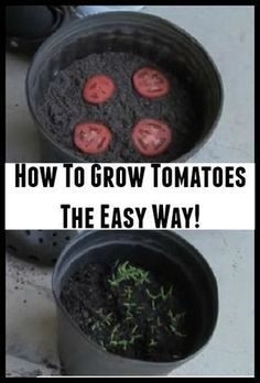 How To Grow Tomatoes The Easy Way #vegetablegardening