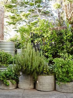 concrete herb planters Brian and Trish Perkins — The Design Files Container Herb Garden, Herb Planters, Herb Pots, Big Planters, Container Flowers, Outdoor Plants, Outdoor Gardens, Balcony Herb Gardens, Terrace Garden