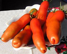 Penis tomatoes  #tomato #interesting #varieties #beautiful #exotic