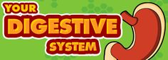 Great information about the digestive system
