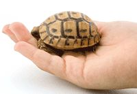 Having terrapin turtles as pets can be a very rewarding hobby, but ...
