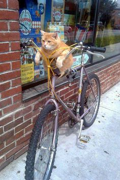 riding to the store for catnip.  I loke it fresh, he said.