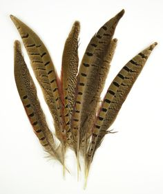 Amazon.com: Ringneck Pheasant Feathers 6/Pkg, Natural: Arts, Crafts & Sewing