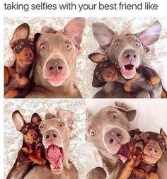 Selfies......