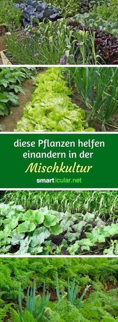 Mit den richtigen Beetnachbarn werden deine Pflanzen gesünder, stärker und ert… With the right bed neighbors, your plants become healthier, stronger and more productive – without any artificial fertilizer or pesticides.