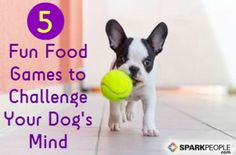 Puzzle Games for Dogs | SparkPeople