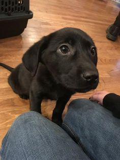 Cute Animals Images, Cute Baby Animals, Animals And Pets, Funny Animals, Cutest Animals, Lab Puppies, Cute Dogs And Puppies, I Love Dogs, Doggies