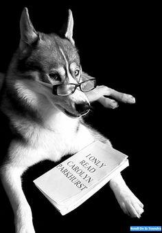 Husky loves reading - Bondi de la Toundra