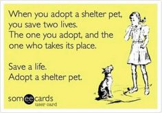 imagesadopt-a-shelter-pet_small.jpg 599×419 pixels
