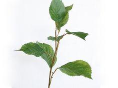 Hydrangea Leaf Spray   Harvey Furnishings