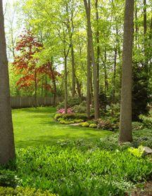 Bon Deirdre E. Toner, Landscape Design, DT Design, Landscape Project,  Landscape, · Jacobu0027s Ladder PlantWoodland GardenGARDEN.