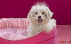 Shaggy köpek fotoğrafı