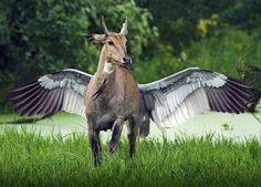 Modern Day Pegasus? | 24 Animal Pictures You Have To Look At Twice