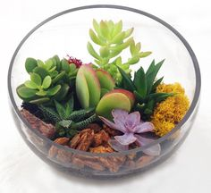 Features:  -Includes succulents, cacti, moss, stones, branches and soil (varies seasonally).  -Fully assembled with plants and ready to be displayed. This not a terrarium kit but you can easily make i
