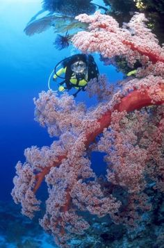 If the smallest marine creatures of the reef are what intrigue you, you wont want to miss these 3 best dive sites for macro life on the Great Barrier Reef! http://aquaviews.net/scuba-dive-destinations/3-dive-sites-macro-life-great-barrier-reef/