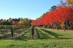 Viticulture  Williamsburg Winery