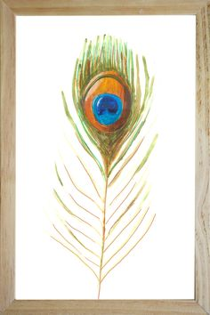 illustration peacock feather in frame illustration collection decoration design painting catchii.com