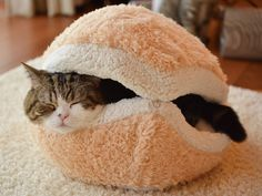 PetsLady's Pick: Cute Cat-Burger of the Day  ... see more at PetsLady.com ... The FUN site for Animal Lovers