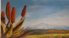 Oil - Aloes