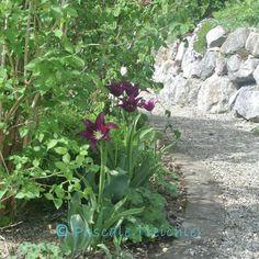 Gartenweg aus Kies #gravelpath #spring #gravelgarden
