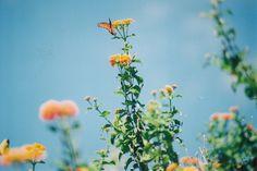 https://flic.kr/p/5mqVrL | butterfly | film.