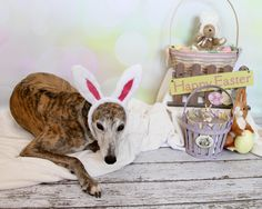 Treasure What You Have: Happy Easter