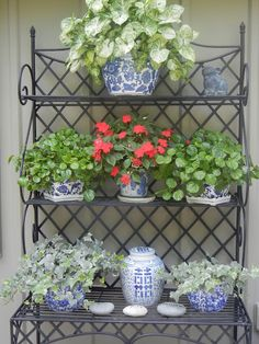 Blue and white plantings on a black wrought iron shelf...a Southern garden.