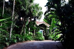 (Richard Graulich/The Palm Beach Post) Palm Beach - The front entrance of Lilly Pulitzers Palm Beach house, called The Jungle, which is for sale for $11.5 million.