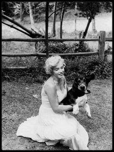 1957 / Les superbes candides de Marilyn, Arthur et Hugo le basset, prisent par Sam SHAW, dans le propriété de MILLER à Amagansett.